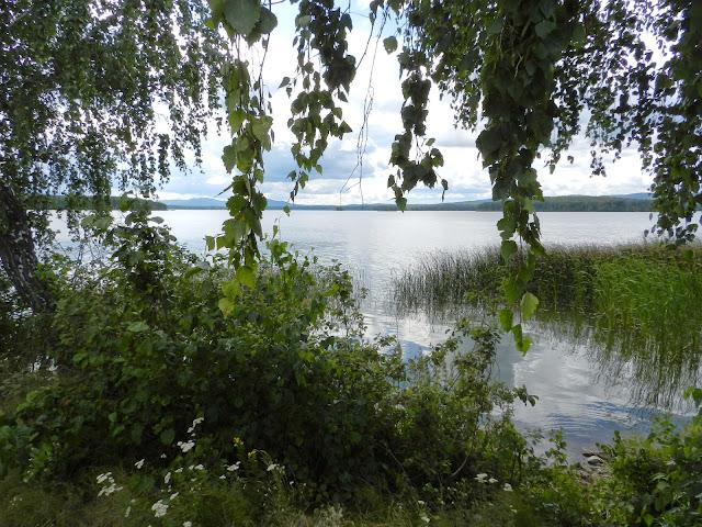 ветки берёзы на фоне озера Киреты