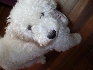 Arthur - Membro da Família