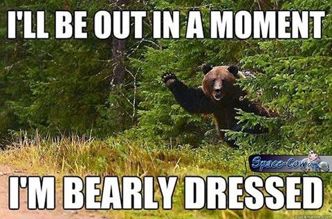 funny bear picture humor