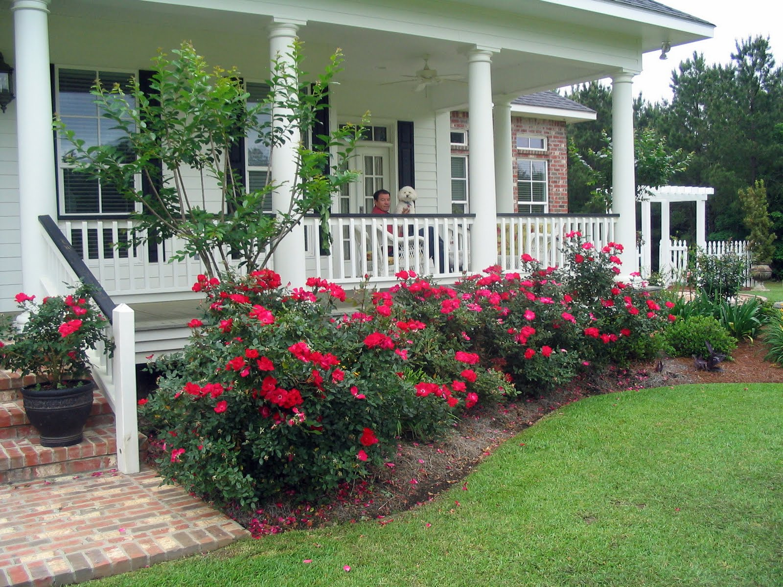 A southern belle dishes on decor my life on the front porch for How to plant bushes in front of house