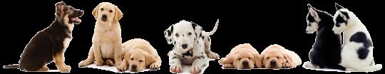 Dogclassificados