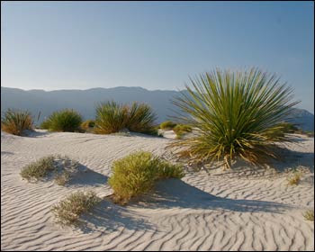 http://2.bp.blogspot.com/-mBltX7aJlA8/ULBCLfgJsWI/AAAAAAAAKwU/-Bbh3Ztidlk/s400/desert+plants+(2).jpg