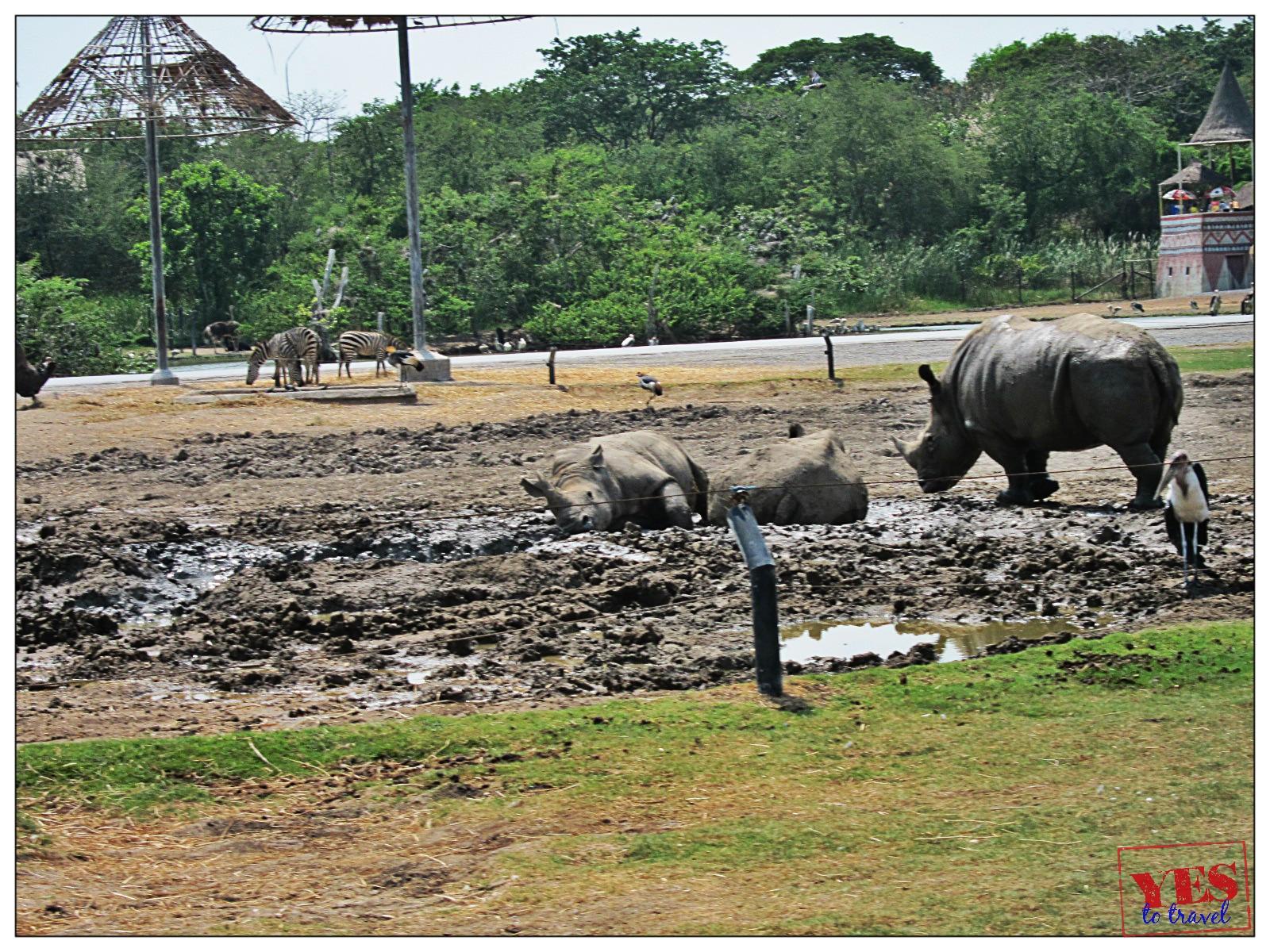 Safari World Bangkok: Safari Park  Yes to Travel