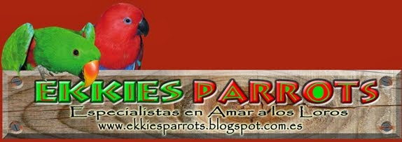 Ekkies Parrots