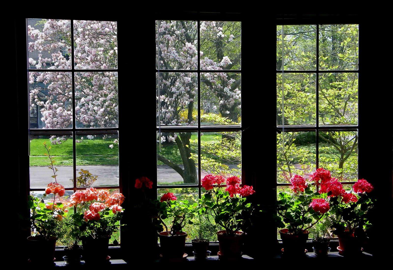 Photos By Stan Spring Window Todays Flowers