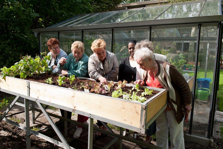 Stadslandbouw in schiebroek zuid 5 12 2011 bericht uit hamakerstraat for Tuin allen idee