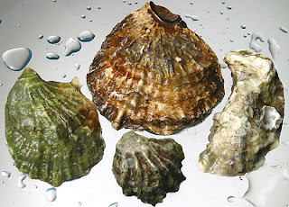 oysters offset ocean acidity