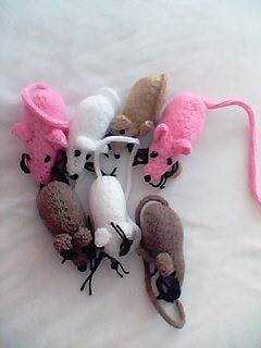 mice to go to battersea dog/cat home xxx