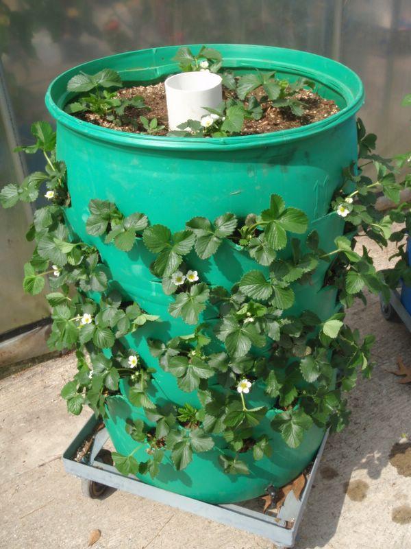 Cheap Gardening Ideas