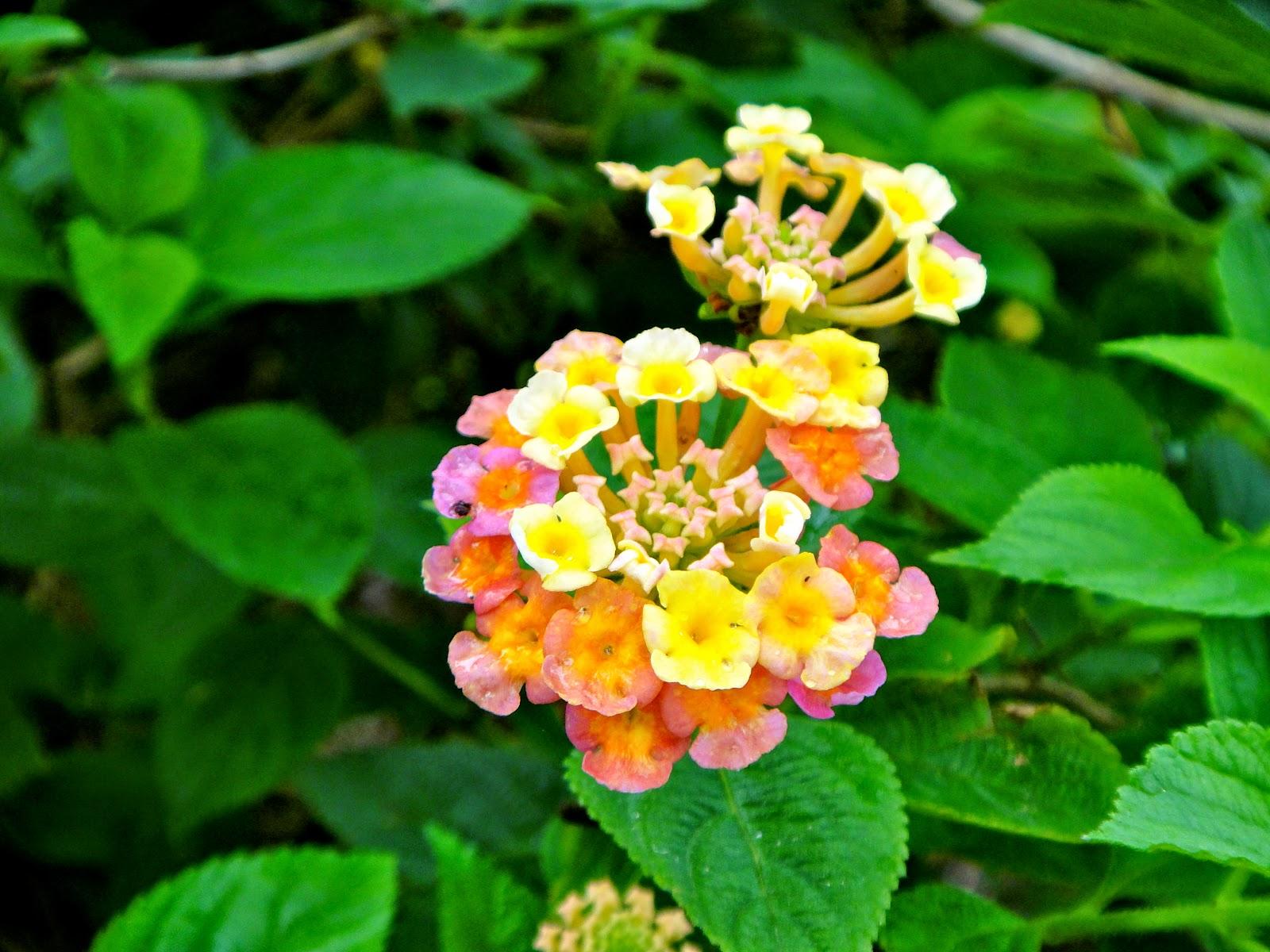 Flowers at Pine Garden Hualien Taiwan