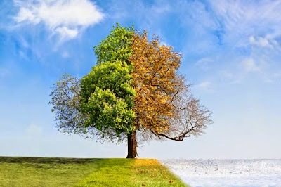 The Seasons Affect How Your Genes Work,winter,fall,summer,spring