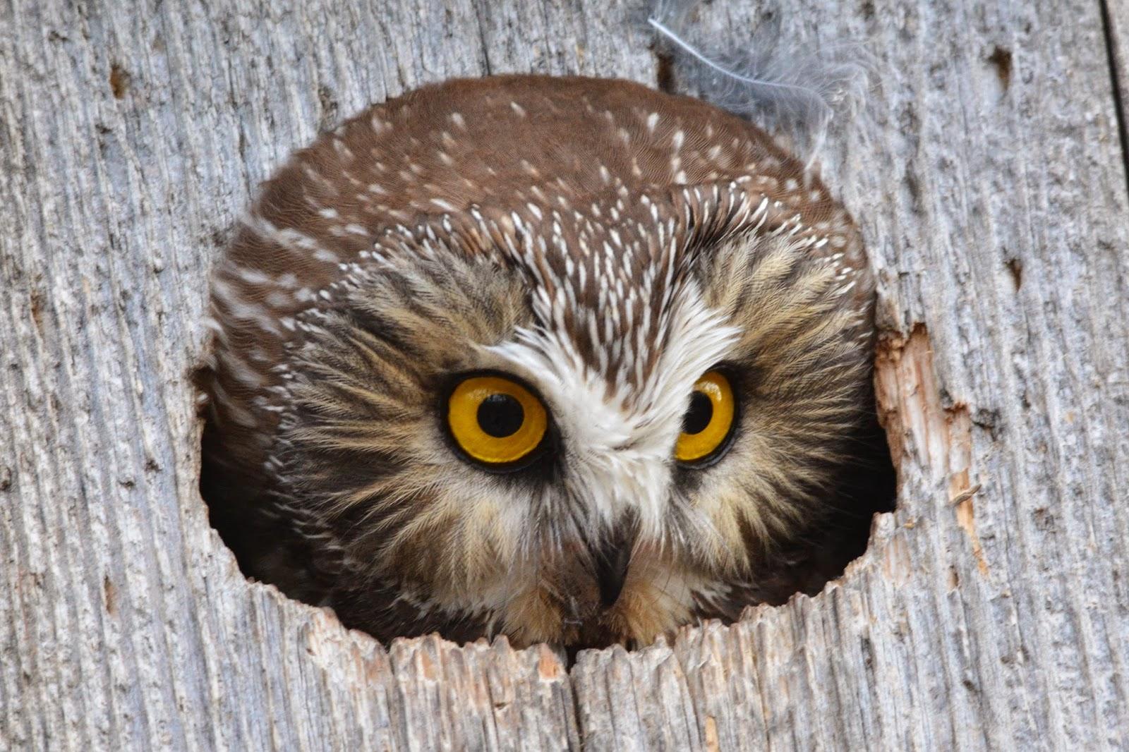 purdue owl essays