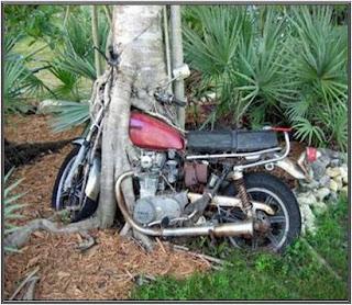 Acho que esta moto esta aí por muito tempo!!!