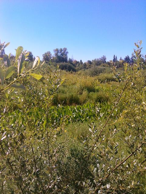 Kingfisher Marsh