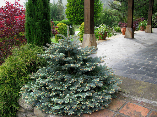 Arte y jardiner a los rboles en el jard n for Arboles para jardines pequenos