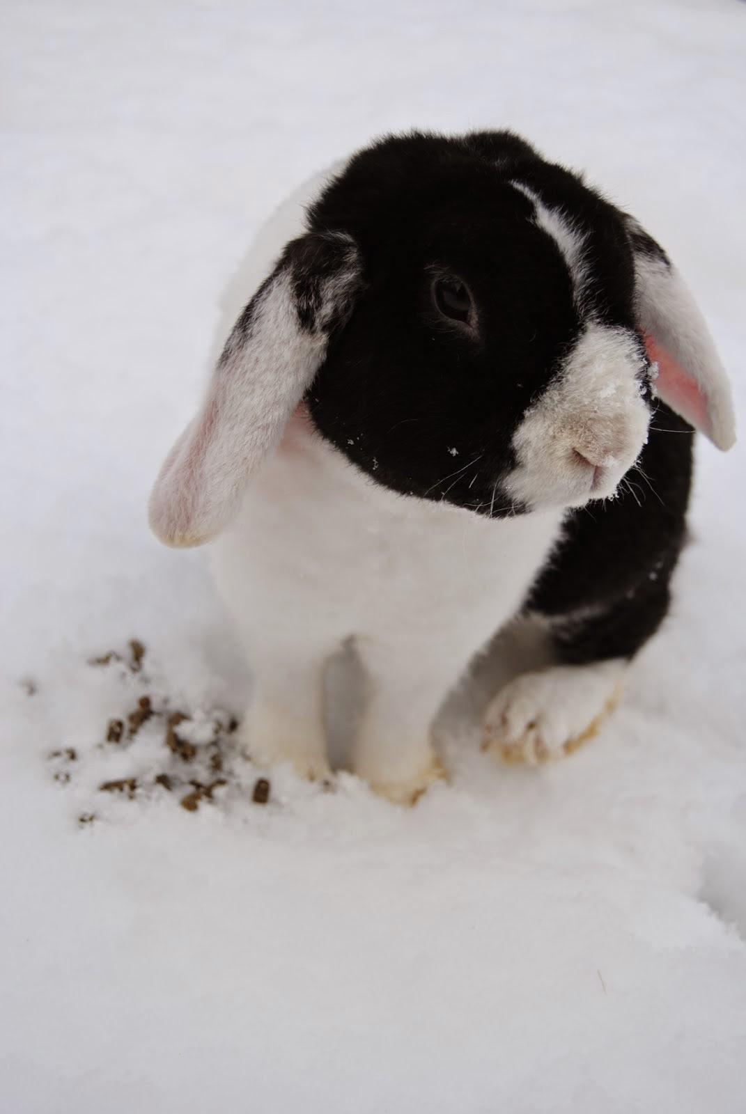 Klicka på bilden så kommer du till min kaninblogg