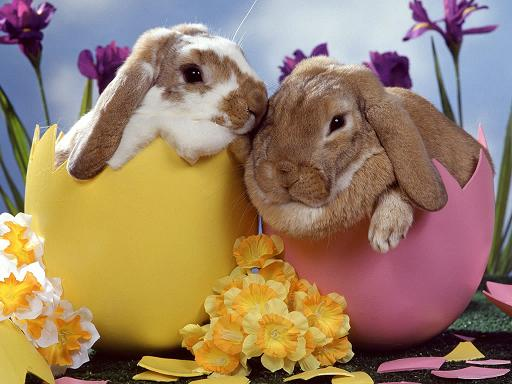 pictures of easter bunnies to color. cute easter bunnies to color.