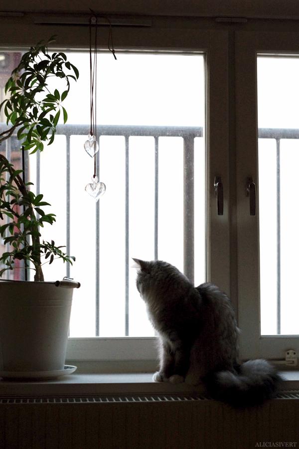 aliciasivert, alicia sivert, alicia sivertsson, katt, cat, katten tofslan