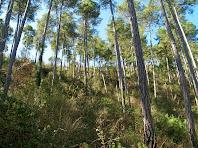 El Bosc de Coromines