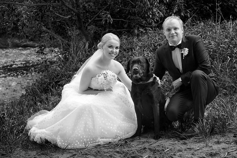 vestuvinės nuotraukos su augintiniais