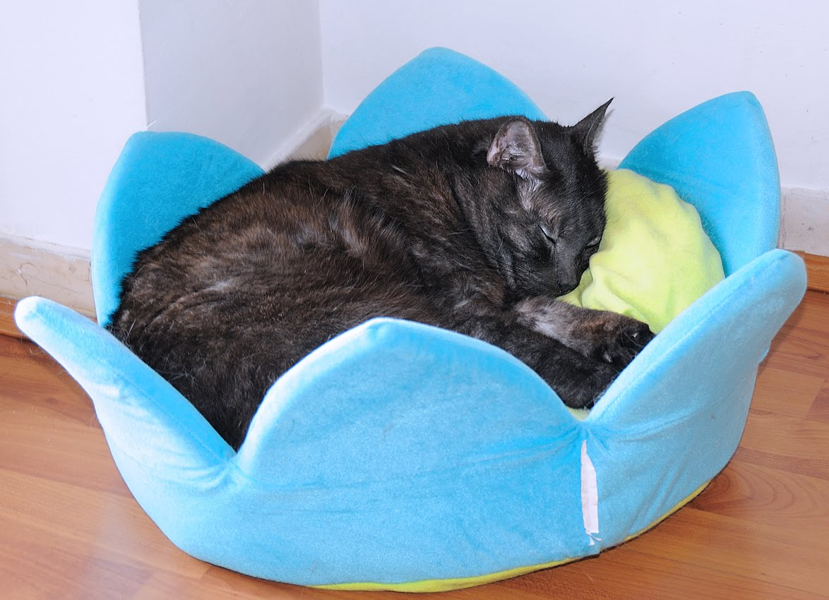 Cat Eye Twitching In Sleep Eyes Open