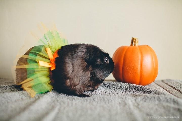 guinea-pig-ballerina-halloween-costume
