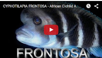 VIDEO - FRONTOSA
