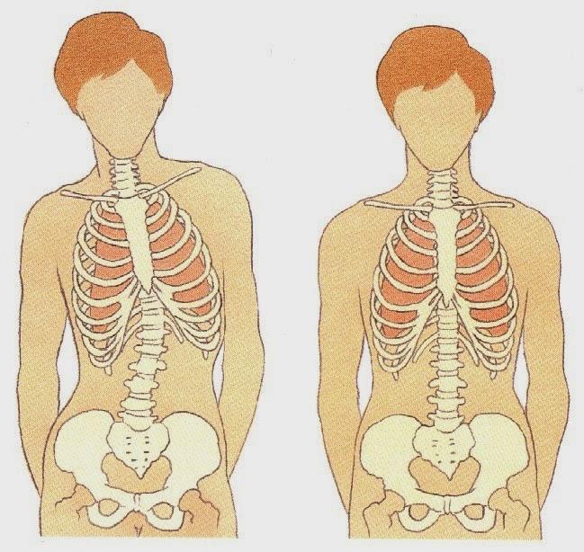 alinhamento vertebral, técnica vocal