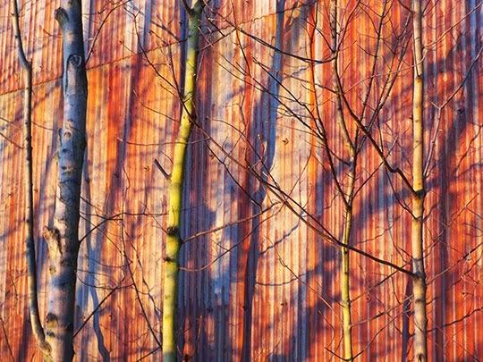 trees, shadows, urban photography, contemporary, photo, art