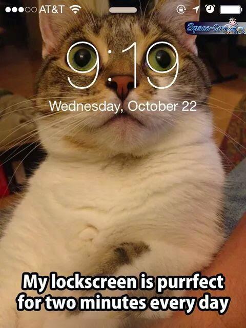 funny animals cat picture