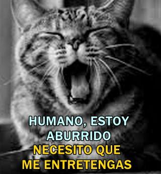 gato-aburrido