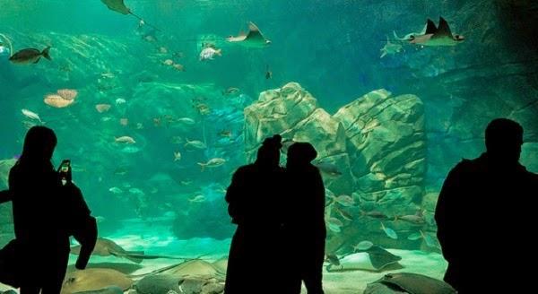 Aquarium silhouette