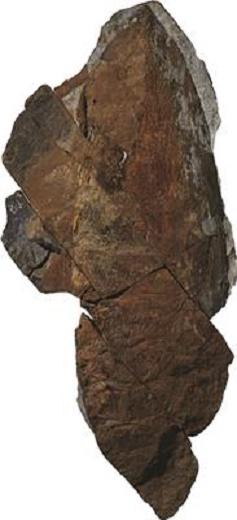 Spectacular Moroccan fossils redefine evolutionary timelines