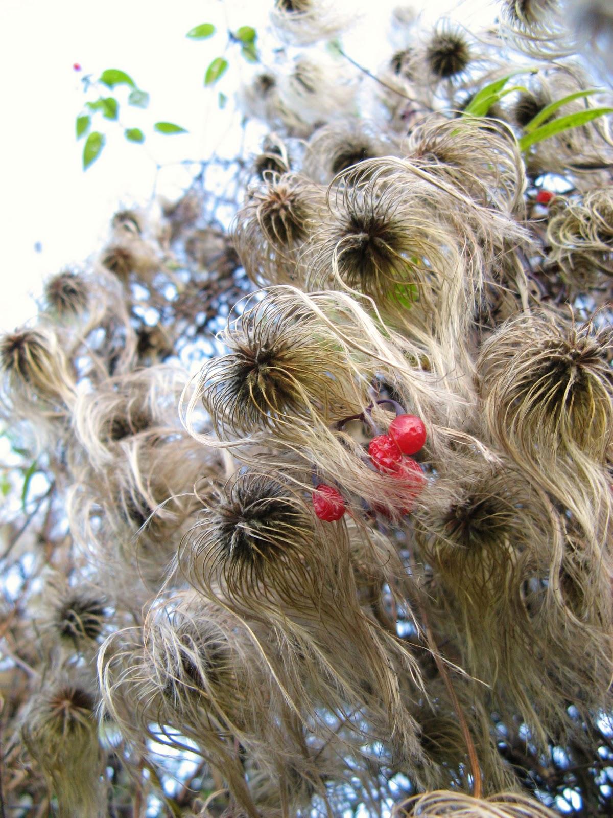 Strange Hairy Plants