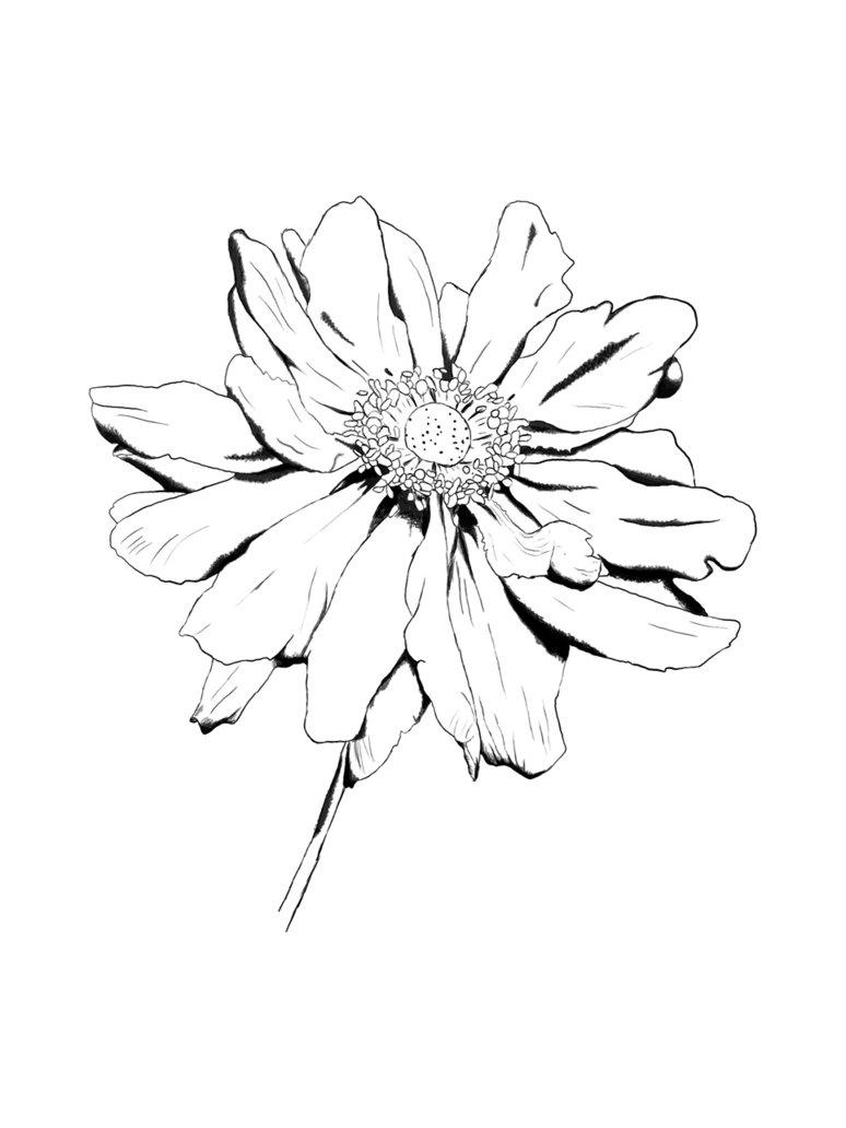 Flower Head Line Drawing : Sparet er tjent blomster tegninger lær at tegne
