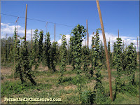 High Hops Hop Farm