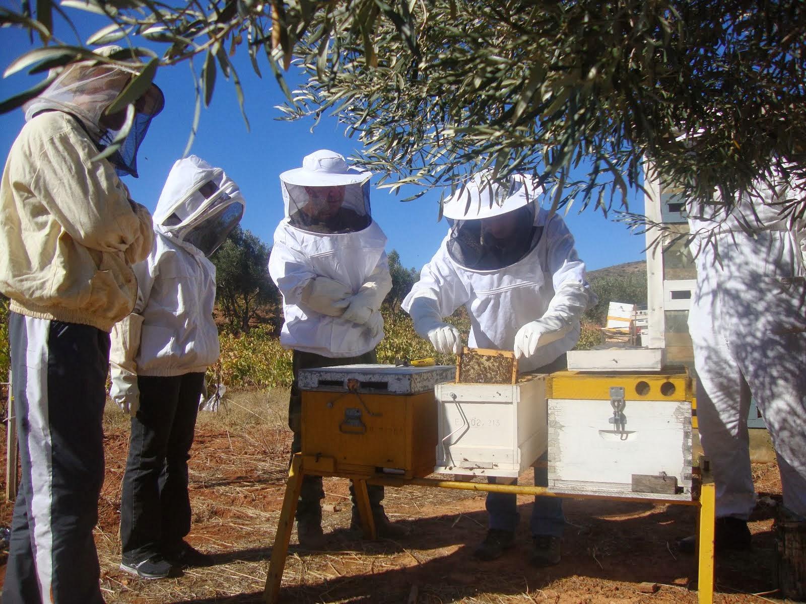 Διαρκής ενημέρωση μελισσοκόμων