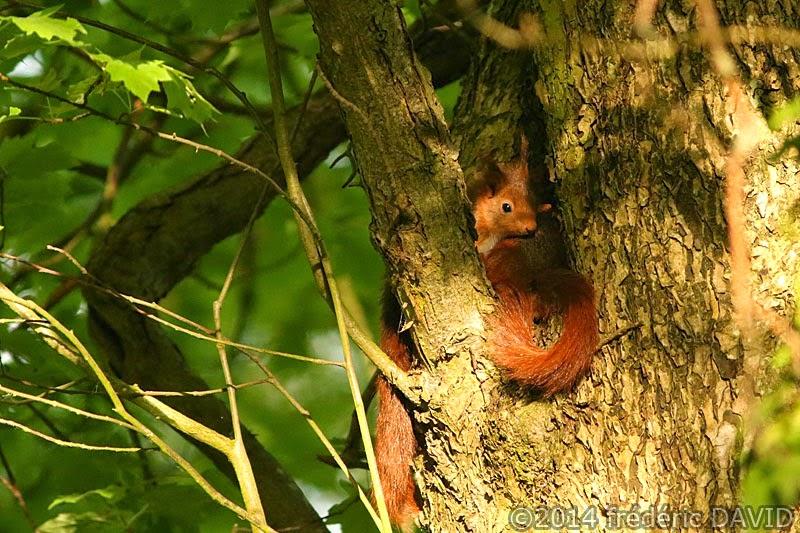 animaux nature écureuils forêt arbre Sénart