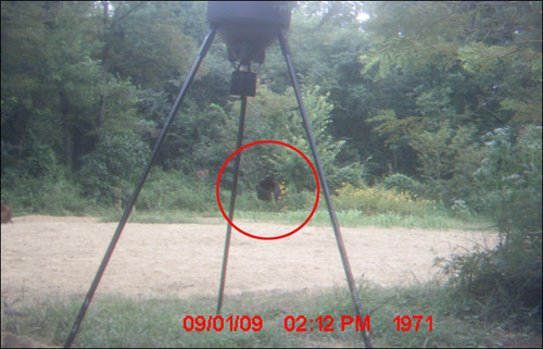 Bigfoot on trail camera