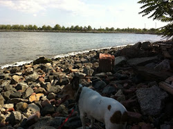 Gus Walks Along The Hudson River