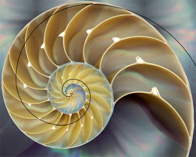 time, flow, nature, structure, shell, fibonacci, spiral