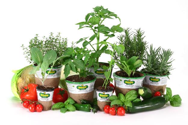 italian gardening 2011