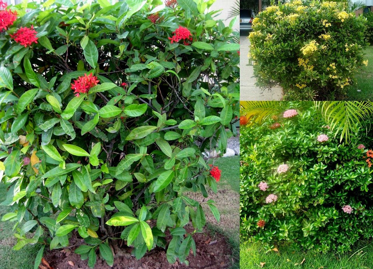Vivero san francisco diciembre 2014 for Plantas ornamentales croto