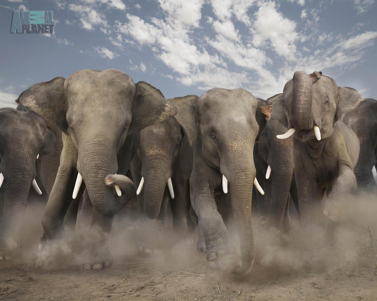 wild animals wallpaper
