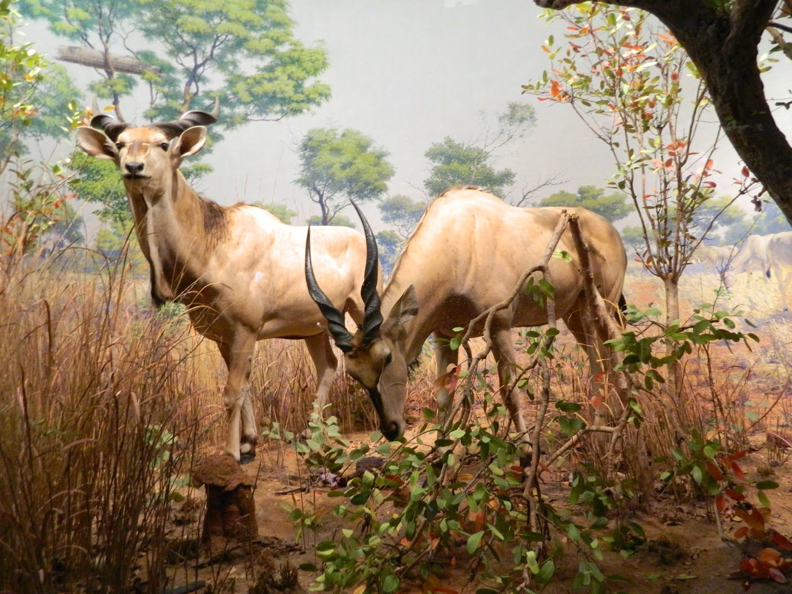 new york city american national history museum animal  inside stuffed taxidermy deer tree