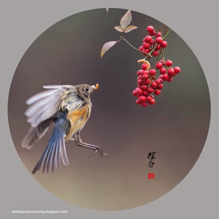 Những chú chim tung tăng ngày nắng ấm 12