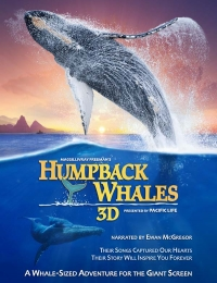 Humpback Whales | Bmovies