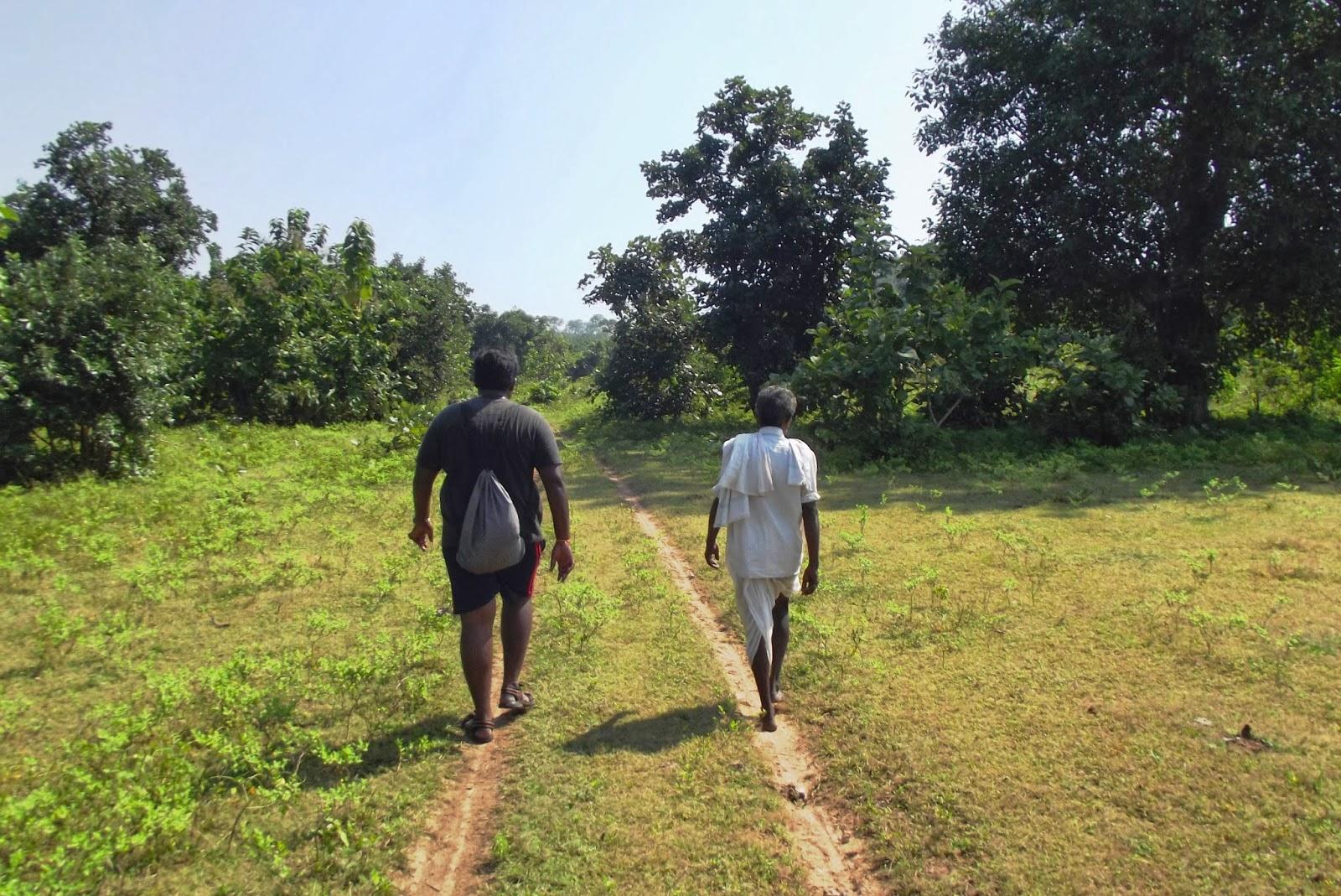 Trail through the fields