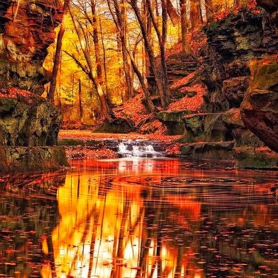 Autumnal pool reflections