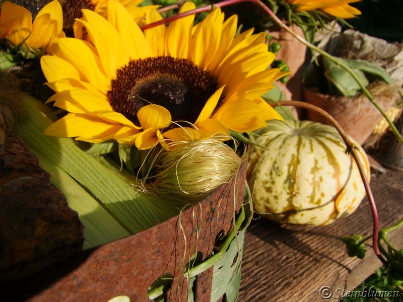 Herbstdeko Sonnenblumen
